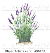 Lavender Clipart by Gina Jane
