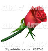 Rose Clipart by Dero