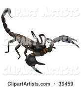 Scorpion Clipart by Dero