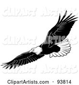Vector Bald Eagle Clipart by Dero