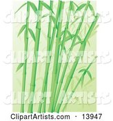 Vector Bamboo Clipart by Rasmussen Images