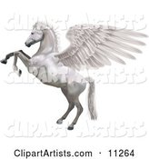 A White Winged Horse, Pegasus, Rearing up on Its Hind Legs