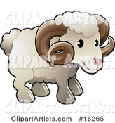 Adorable White Male Sheep, a Ram, with Brown Curly Horns