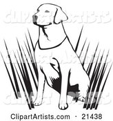 Alert Labrador Retriever Dog Hunting with His Master, Sitting in Tall Grasses and Waiting, on a White Background