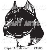 American Staffordshire Terrier Dog's Head, Facing Slightly Left