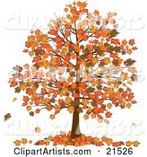 Autumn Tree with Vibrantly Colored Orange and Yellow Fall Leaves on the Branches and on the Ground Below