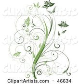 Beautiful Organic Green Plant with Tendril Leaves on White