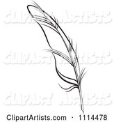 Black and White Feather Quill
