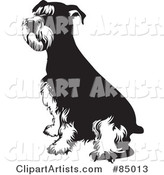 Black and White Seated Schnauzer Dog