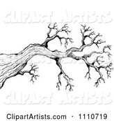 Black and White Sketched Bare Tree Branch