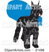 Black Schnauzer Dog with a Shiny Coat, Standing and Facing Right