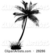 Black Silhouetted Palm Tree with a Tuft of Grass