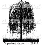 Black Silhouetted Weeping Willow Tree and Grasses over White