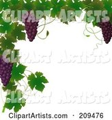 Border of Grape Vines and Purple Grapes