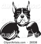 Boxer Dog with Cropped Ears, Fighting with Boxing Gloves, Black and White