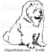 Chow Chow Dog Sitting and Facing to the Right, over a White Background