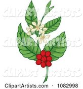 Coffee Plant with Berries and Flowers