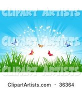 Colorful Butterflies Frolicking Above Grass in Front of a Bursting, Sparkling Blue Sky