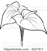 Coloring Page Outline of Two Anthurium Flowers