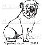 Cute and Obedient Bulldog Seated, over a White Background