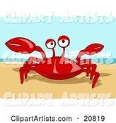 Friendly Red Crab Getting Sunshine On A Warm Sandy Beach