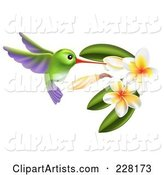 Green and Purple Hummingbird with Plumeria Flowers