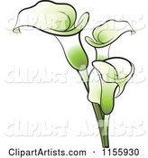 Green Calla Lily Flowers