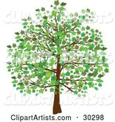 Grown Tree with Green Leaves and Foliage