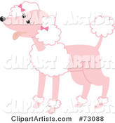 Happy Pink Poodle with White Fluff