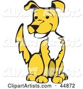 Happy Yellow Dog with a White Chest, Sitting and Wagging His Tail