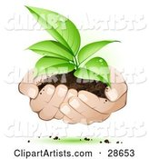 Human Hands Supporting a Sprouting Green Plant in Dirt, Symbolizing Support