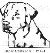Labrador Retriever Dog's Face, Looking off to the Left, on a White Background