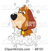 Old Hound Dog in a Sudsy Bath