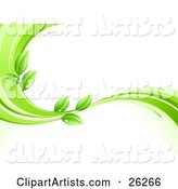 Organic Background of Green Leaves Wet with Dew Drops on a Green and White Wave, over White