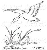 Outlined Duck Flying over Cattails in a Pond