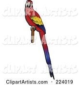 Perched Scarlet Macaw with Its Body in Profile and Face Looking Outwards