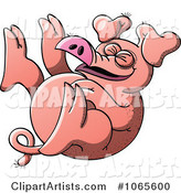 Pig Rolling Around and Laughing