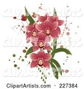 Pink Striped Orchids with Grunge Splatters, Leaves and Drops