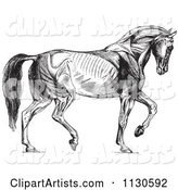 Retro Vintage Diagram of Walking Horse Muscles in Black and White