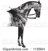 Retro Vintage Engraved Horse Anatomy of a Reined Horse with Good Shoulders in Black and White