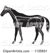 Retro Vintage Horse Anatomy of the Nervous System in Black and White