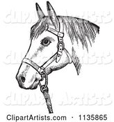 Retro Vintage Horse with Good Form for a Halter of in Black and White