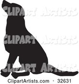 Seated Dog Silhouetted in Black