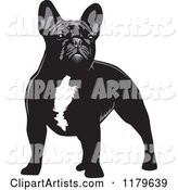 Standing Black and White French Bulldog