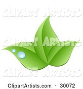 Stock Logo of Three Green Leaves and Blue Drops of Dew Above a Space for a Company Name and Information
