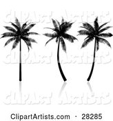 Three Tropical Palm Trees Silhouetted in Black, on a Reflective White Surface
