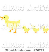 Three Yellow Ducklings Following Their Mother; Ducks in a Row