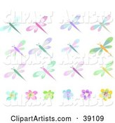 Twelve Colorful Dragonflies and Six Flowers