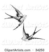 Two Swallows Flying Together