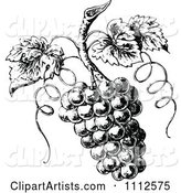 Vintage Black and White Grapes on the Vine
